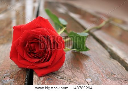 Red Rose on a Rain Covered Deck