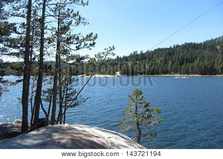 Pristine Lake Alpine from a rock and tree on the shore, Highway 4, California