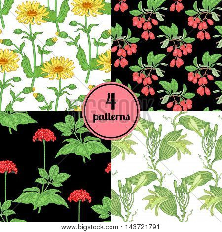Set of four seamless vector patterns with various plants barberry ginseng arnica vanilla.