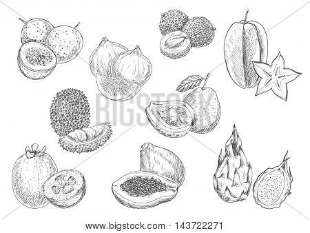Exotic and tropical fruits. Vector pencil sketch isolated icons of papaya, durian, carambola, lychee, mangosteen, guava, fig, dragon fruit