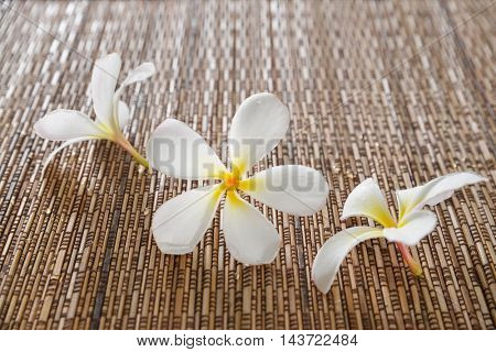 Three white frangipani flower on mat