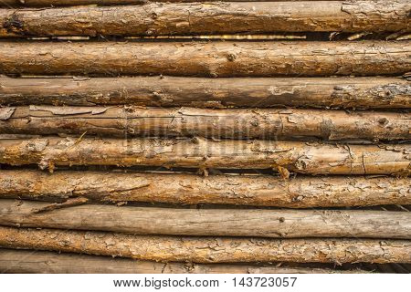 Wooden background of pine logs peeled bark.