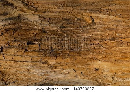 Old wood cracked texture. Abstract background, empty template.