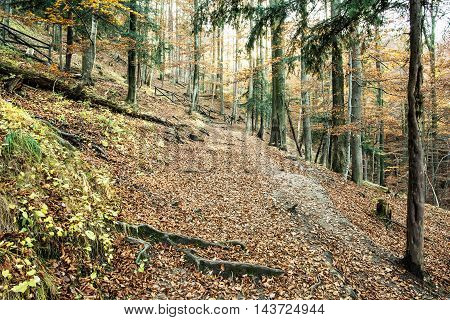 European Deciduous Forest In Autumn, Beauty In Nature
