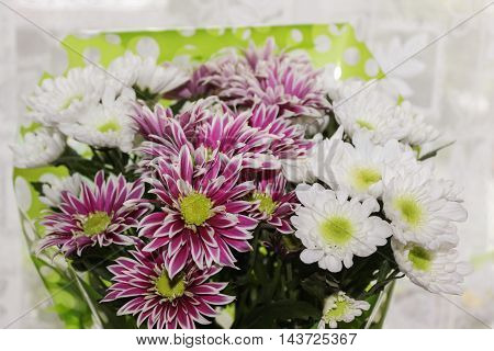 Beautiful bouquet of white and purple chrysanthemums