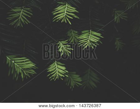 Branches of evergreen plants in the flowerbed in the garden