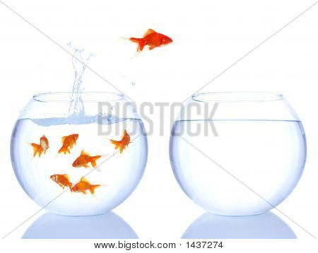 Red Fish Jumping