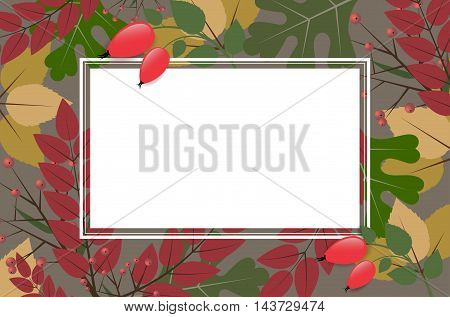Rectangle Frame On Autumnal Background With Leaves And Rose Hips