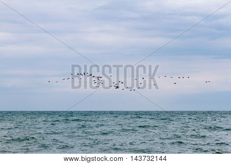 cormorants in flight over the surface of the lake