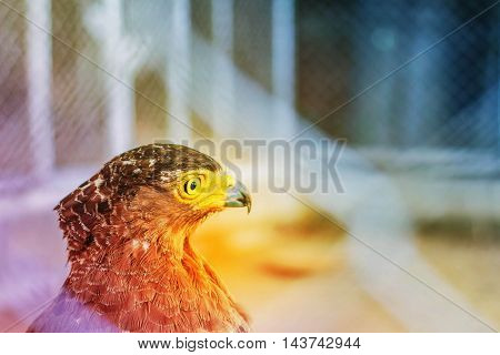 Hawks inside a steel cage with the light that comes back.