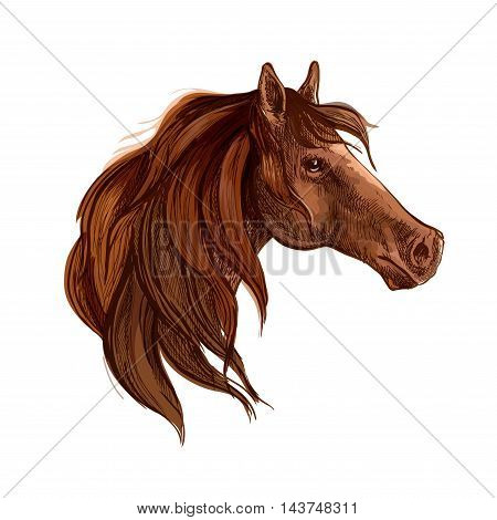 Bay horse with long mane vector portrait. Brown stallion mustang head wth gazing glance