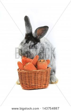 rabbit with a carrot basket on white background