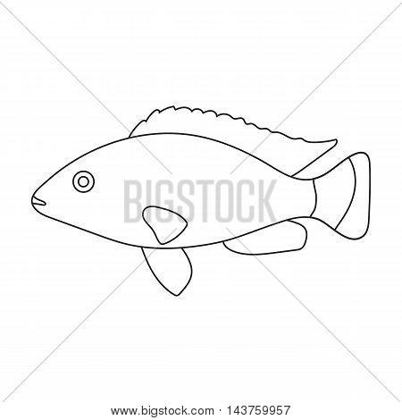 Cichlid hummingbird fish icon line. Singe aquarium fish icon from the sea, ocean life collection.