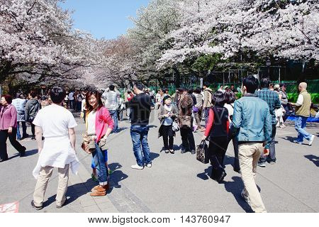 Japan Cherry Blossom