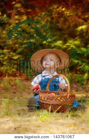 Little boy with a basket of apples in autumn garden