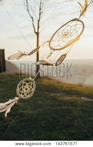 dream catcher hanging from a tree in a field at sunset