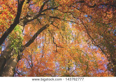 Vibrant orange, yellow and green fall tree foliage background, retro toned