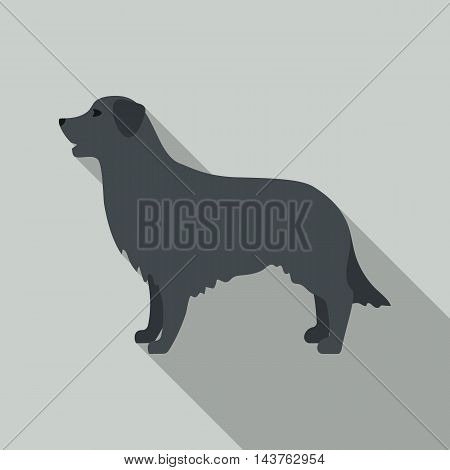 Retriever vector illustration icon in flat design