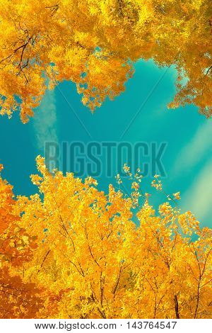 Vibrant fall yellow golden tree foliage on blue sky frame, retro toned