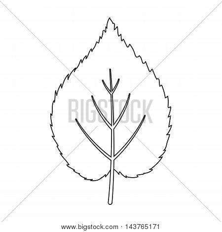 Linden leaf vector illustration icon in line design
