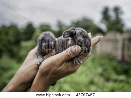 Amazing cute little rabbits in human's hands