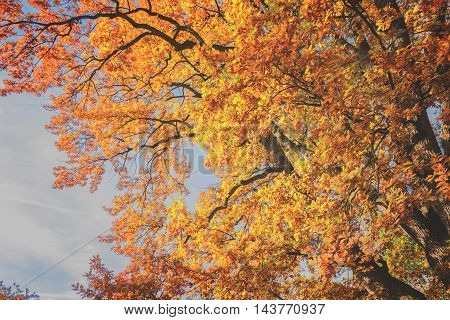 Vibrant fall yellow and orange tree foliage, retro toned