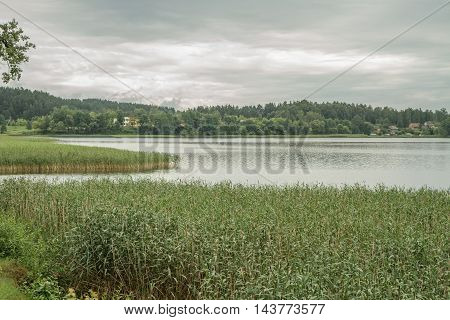 Lake Overgrown With Reeds