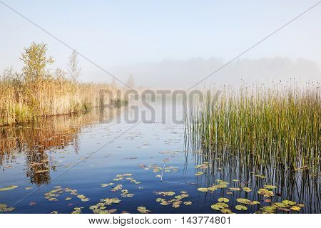 Mist summer landscape with river and bulrush