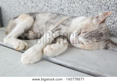 Cat sleeping in the chair