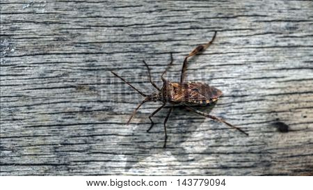 red insect on a wooden table outdoor macro closeup
