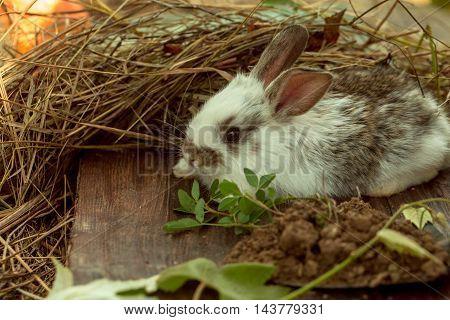 Little Rabbit Bunny