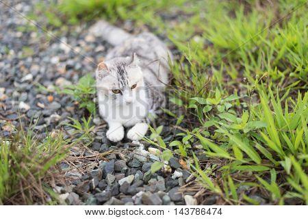 one domestic little kitten portrait