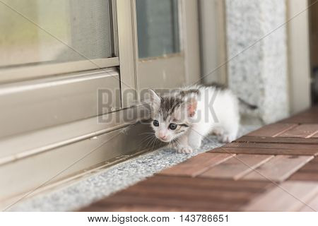 little baby cat walk out from their home