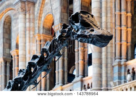 Entry Of The Natural History Museum In London