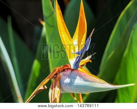 Bird Of Paradise Beautiful Red Flower