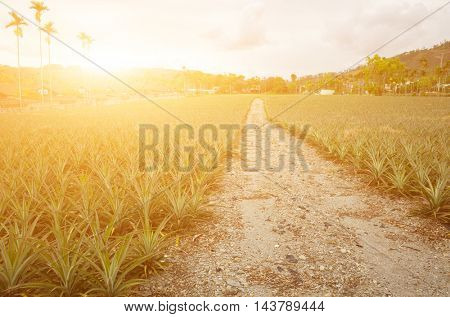 Road with nobody, landscape at Luye, Taitung, Taiwan, Asia.