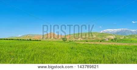 The tall grass is swaying in the wind on the scenic meadow with Gissar range of Pamir-Alay mountains on the background Qashqadaryo Region Uzbekistan.