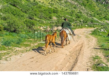 The rider on a mare and her foal runs after her along the Zarmas gorge Gissar Nature Reserve Uzbekistan.