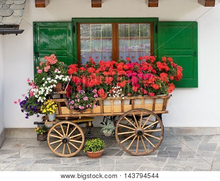 Decorative wooden cart filled with colorful summer flowers and potted plants standing in front of a window with open green shutters on paving stone