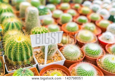 Beautiful small cactus field