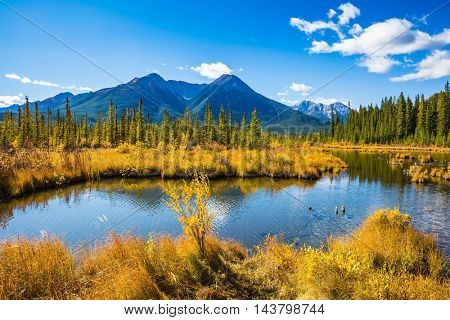 The lush golden autumn in lakes Vermilion. Canadian province of Alberta, the Rocky Mountains, Banff. Concept of ecotourism