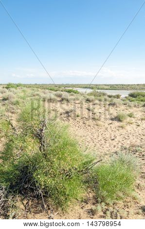 Steppe sand. Spring in the desert wild, land, beautiful,
