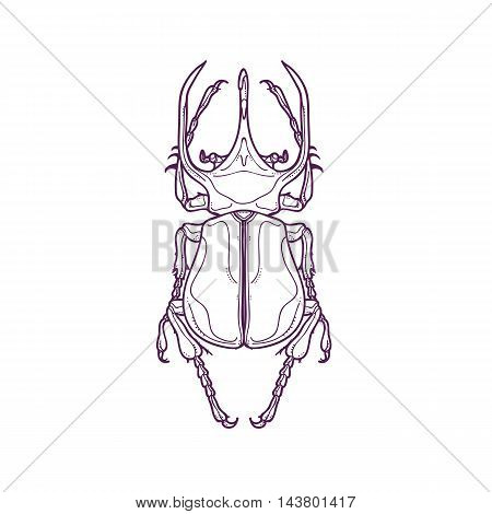 Vector Illustration of Outline Big Horn Beetle Bug Insect Hand Drawn, Chalcosoma Atlas