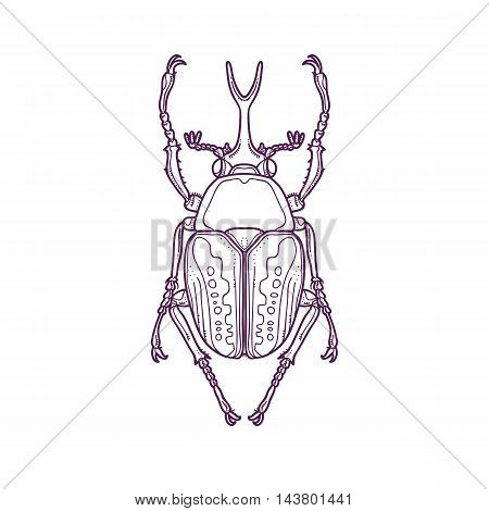 Vector Illustration of Outline Scarab Beetle Bug Insect Hand Drawn, Megalorrhina harrisi procera