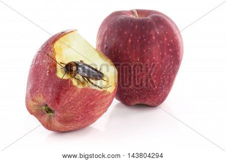 cockroach sitting and eating on a red apple Image isolated on white studio background.