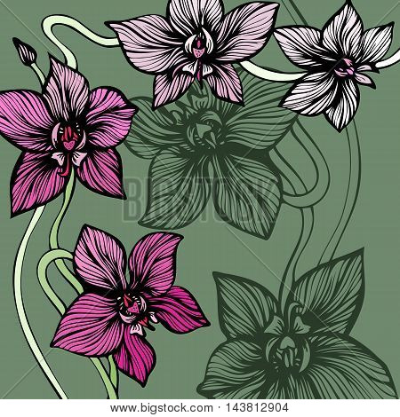 Orchid decorative background. Hand drawn line art tropic flowers. Blooming orchids. Vector illustration.