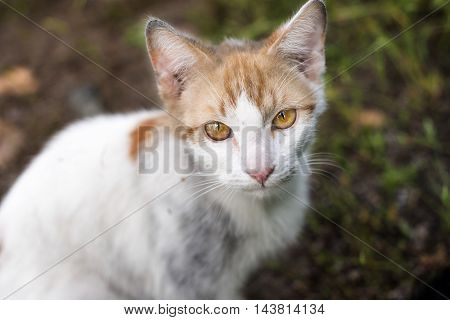 look of stray cat with deep yellow eyes