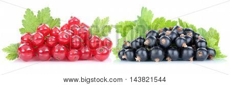 Red And Black Currant Currants Berries Fresh Fruits Fruit Isolated On White