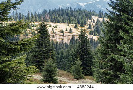 Forest at Great Fatra range in Slovakia