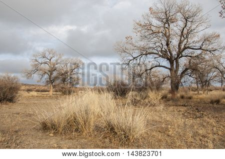 steppe Steppe, in the floodplain of the river, in the winter season. Treeless, poor moisture and generally flat area with grassy vegetation in the Dry Zone.